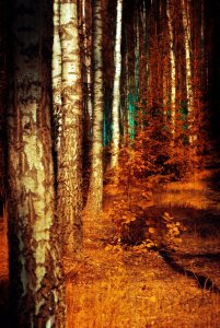 forest_by_kr_2y_51_3k